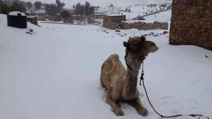 Погода в Египте зимой