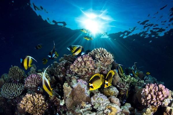 Египет Красное море дайвинг