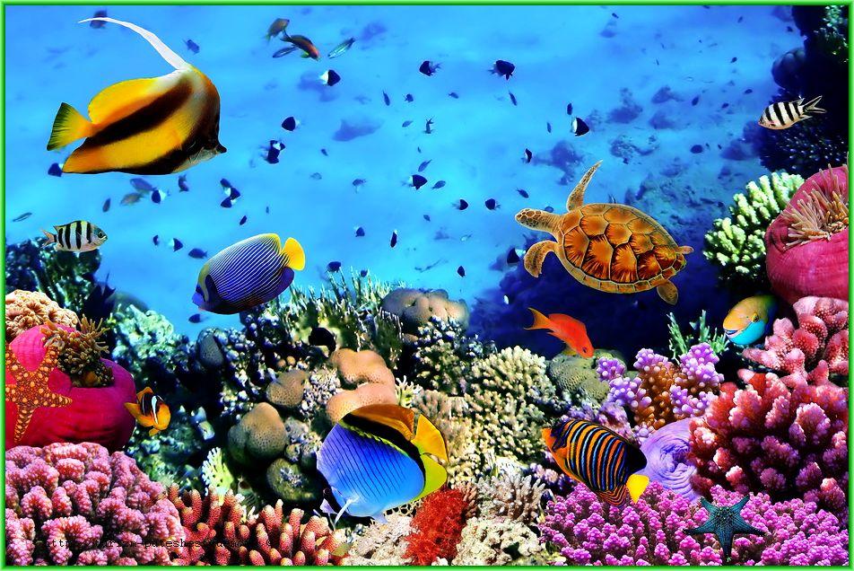 фауна в Красном море